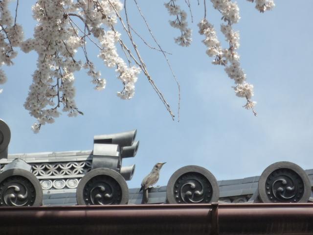 inuyama1-5.jpg